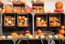 farmařské trhy, zdar nad sazavou, ovoce, zelenina, trhy, vysocina